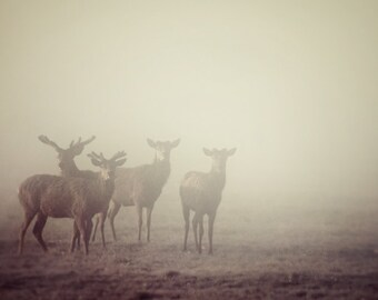 """Nature Photography, Minimalist Deer Print, Rustic Wall Decor, Deer Silhouette in Fog, Nature Print, Brown 8x8 Print """"Cautionary Tales"""""""