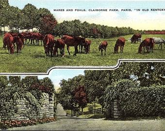 Paris, Kentucky, Claiborne Farm, Horses, Mares, Foals - Postcard - Vintage Postcard - Unused (GG)