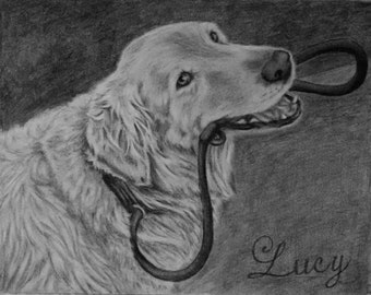 Pet Portrait, Pencil Pet Drawing, Pet Memorial