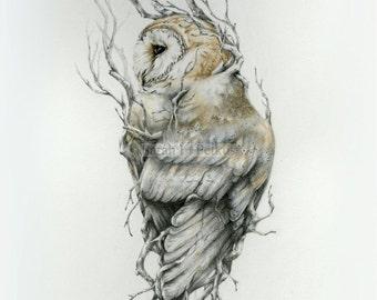 Barn owl -13 x 19  fine art print- owl art - drawing