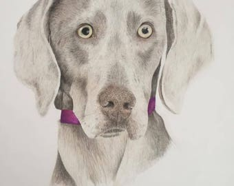 Custom Detailed colored pencil Pet Portrait