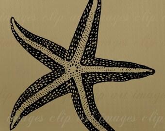 Starfish Clip Art, Royalty Free, beach clip art, ocean clip art, nautical digital download, design element, commercial use, digital download