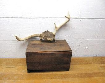 Vintage Deer Horns,Deer Antlers, Southwestern Decor, Sun Bleached Horns, Real Deer Skull, Weathered Skull with Horns, Doe or Buck Skull