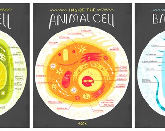 All Three Cell Anatomy Art Prints DEAL