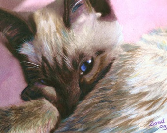 ACEO    Siamese Cat ACEO Trading Card Print     MJ Zorad Art