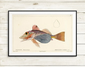 vintage fish prints, vintage fish illustration, antique book illustrations, antique fish art prints, fish wall art, book decor, kitchen art