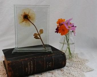 Pressed Oriental Poppy/Glass Platform Frame/Pressed Flower Art/Home Décor/Housewarming Gift/Unique Wedding Gift/Unique Birthday Gift