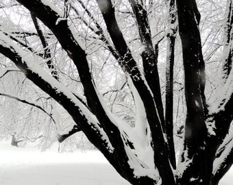 Beautiful  Snow - Snow covered Trees Land - Winter Snow - New York in Blizzard - Nature Art - Wall Decor - Nature Landscape Photograph