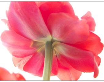 Pink Tulip Print, Flower Photography, Tulip Art, Floral Art Print, Floral Wall Decor, Nursery Decor