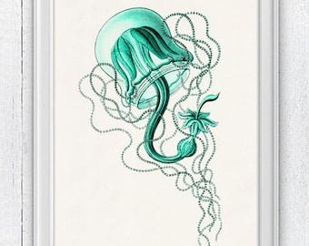 Jelly fish Carmarina - sea life print- Seaside wall art  Haeckel sea life illustration A4 print SAS102