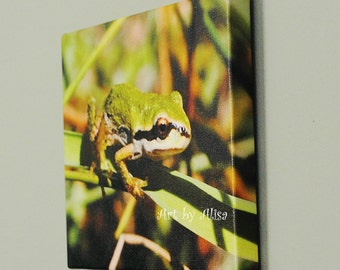 Frog, wildlife gift, Canvas Photo, photo on canvas, art photo, canvas, 8 x 10 inch canvas, nature photo, wildlife photos, reptiles amphibian