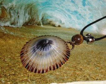 Hawaiian Sea Shell, Opihi Shell Jewelry, Limpet, Hawaiian Opihi Shell, Tigers eye, Necklace
