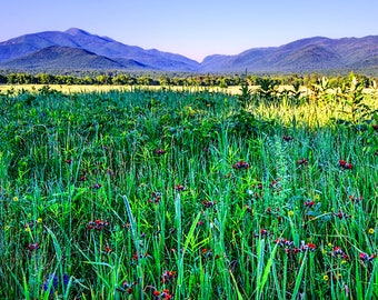 Mountain Print, Art Photography, Scenery Photography, Country Landscape, Wildflower Photography, Lake Placid, Fine Art Print, Gift Idea