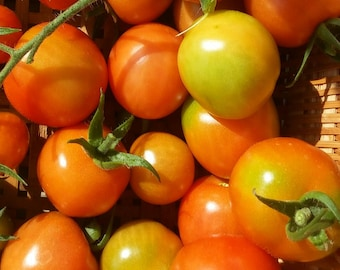Seeds - Tomato, Large Red Cherry - 25 ct.