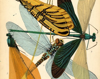 Treasures-Dragonflies-Insects-Art Nouveau- Art Deco-1930-wings of a dragonfly