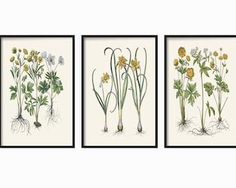 Botanical Print Set of 3 - Vintage Botanical Illustration - Home Decor - Farmhouse Decor - Wall Art - Prints - Botanical Wall Print -  Gift