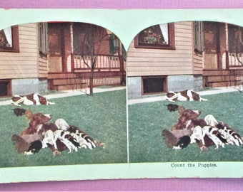 Count The Puppies Rare Antique Atlas Stereograph Card in Color Atlas View Company Chicago Vintage Steroview Card Collectible Vintage Photo