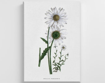 Wild White Daisy Flower Floral Large Canvas Nature Art Print Stylish Home Decoration Wall Art Nursery Decor Living Room | IC106