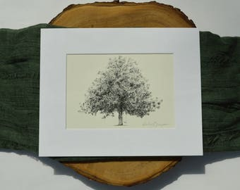 Magnolia Tree Drawing Fine Art Print in Natural - Gordonston Savannah