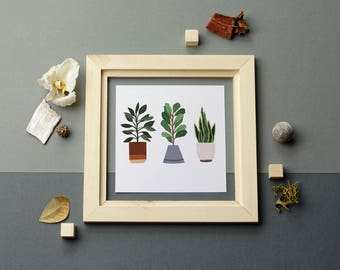 Plants In Three
