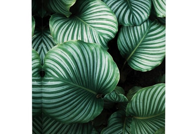 Tropical Striped Plant Leaves Minimal Art Print Wall Decor - Canvas Stretched Framed