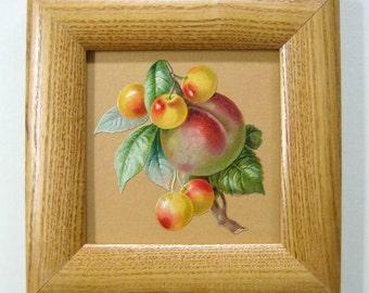Gardening Gift Vintage Cherries Antique Botanical Cherry Print Peach Fruit Art Victorian Die Cut Rainier Cherries Rustic Decor