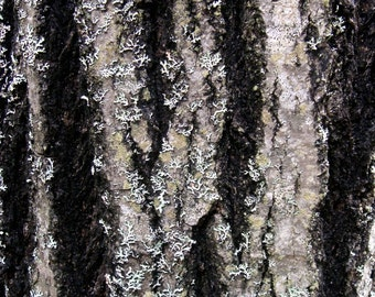 Bark print