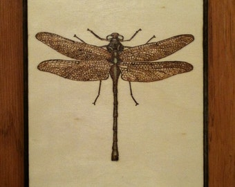 Green Dragonfly plaque