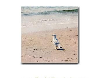 Beach canvas, seagull bird photograph neutral wall decor 12x12, 16x16 gallery wrapped canvas, beige teal grey nautical bath art pale coastal