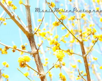 """Yellow Blooms Cherry Tree Photography Printable Instant Download Digital Download Art Yellow Branches Spring Photo Nature """"Bright Outlook"""