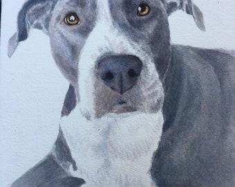 Pet portrait in gouache and watercolor