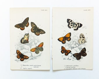 Two Pictures of Butterflies, Victorian Butterflies Picture, Brown Butterflies, Orange Butterflies,  lithograph, nature, spring, insects