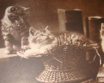 SALE Vintage RPPC (Kittens and Books)