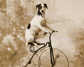 ANTIQUE Photo Dog on Bicycle! INSTANT DIGITAL Download Jack Russell Art Vintage Print Junk Journal Scrapbooking Altered Art to Frame  no1204