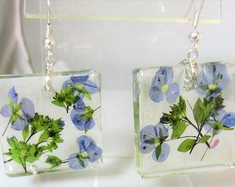 Blue Veronica,  Real Flower Earrings,   Pressed Flower Jewelry, Resin (2066)