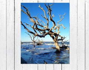 Rustic Nautical Beach Photography | Ocean Waves, Blue Sky, Driftwood Beach, Jekyll Island | Beach Wall Art | Beach House Theme Decor Artwork