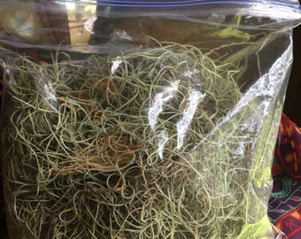 Spanish Moss known as Oak Moss 1 Gallon Bag harvested live from tree per order. Moss is a living