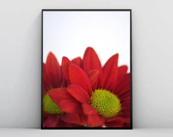 Red Flowers Photography, Download, Printable, Daisies, Summer, Decor, Nature
