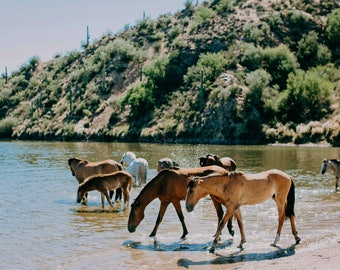 Wild Horses of the Salt River Fine Art Print #3