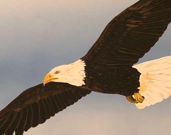 16 x 20 American Bald Eagle