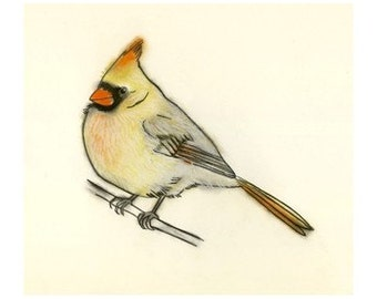 Bird art bird print Cardinal - 4 X 6 print - 4 for 3 SALE