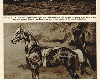 Antique Print, 1920s Dappled Horse, wall art vintage photogravure animals chart illustration