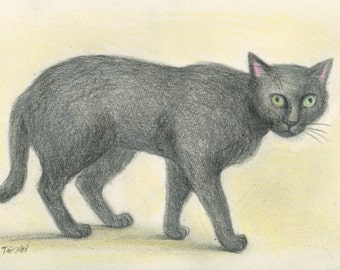 Cat original drawing - P002January2016