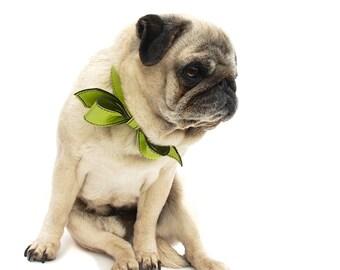 Limelight Martini Bowtie Dog Collar