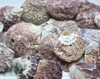 Tumbled shells