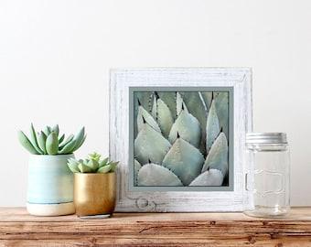 Desert Photo Art, Cactus Art Print, Succulent Photo, Desert Photography, Home Decor, Wall Art, Southwest Photo Art,  Soft Green, Teal, Black