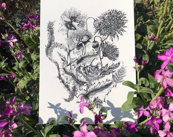 A4 Giclee botanical illustration, flora, black and white, plants, drawing, sketch, print, paper, flowers, nature