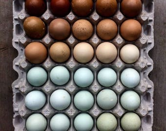 18 Blown Eggs, Color Wheel, from Chickens Ducks Geese, Hand Blown Eggs, Easter Decorations, Decorated Eggs, Easter Eggs, Farmhouse Decor