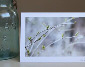 Spring Photo Art Card