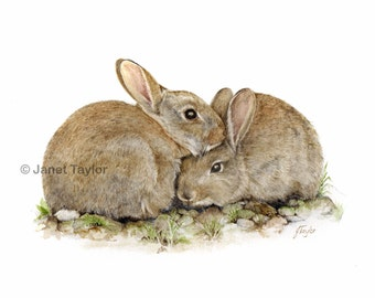 Rabbit painting - Print of a painting by Jan Taylor:  A pair of young rabbits.